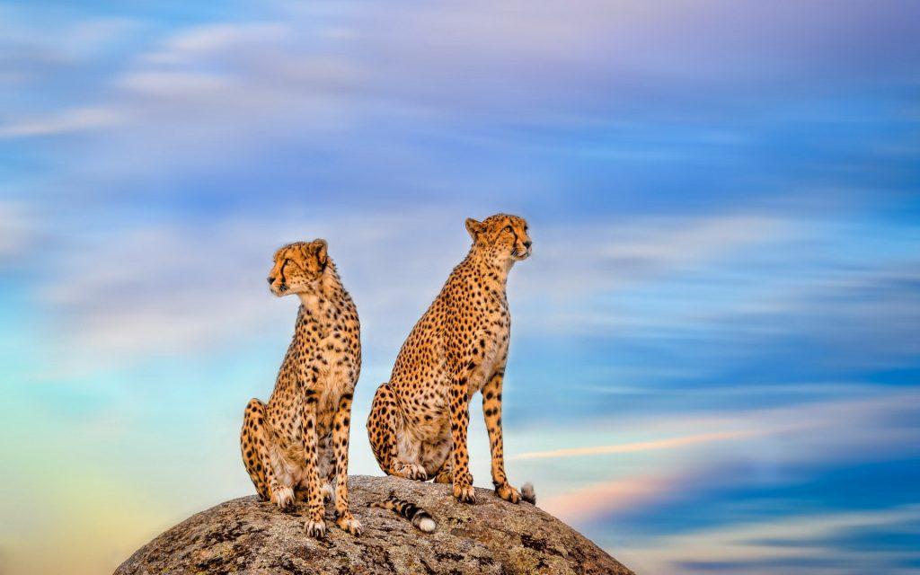 Wildlife-watching