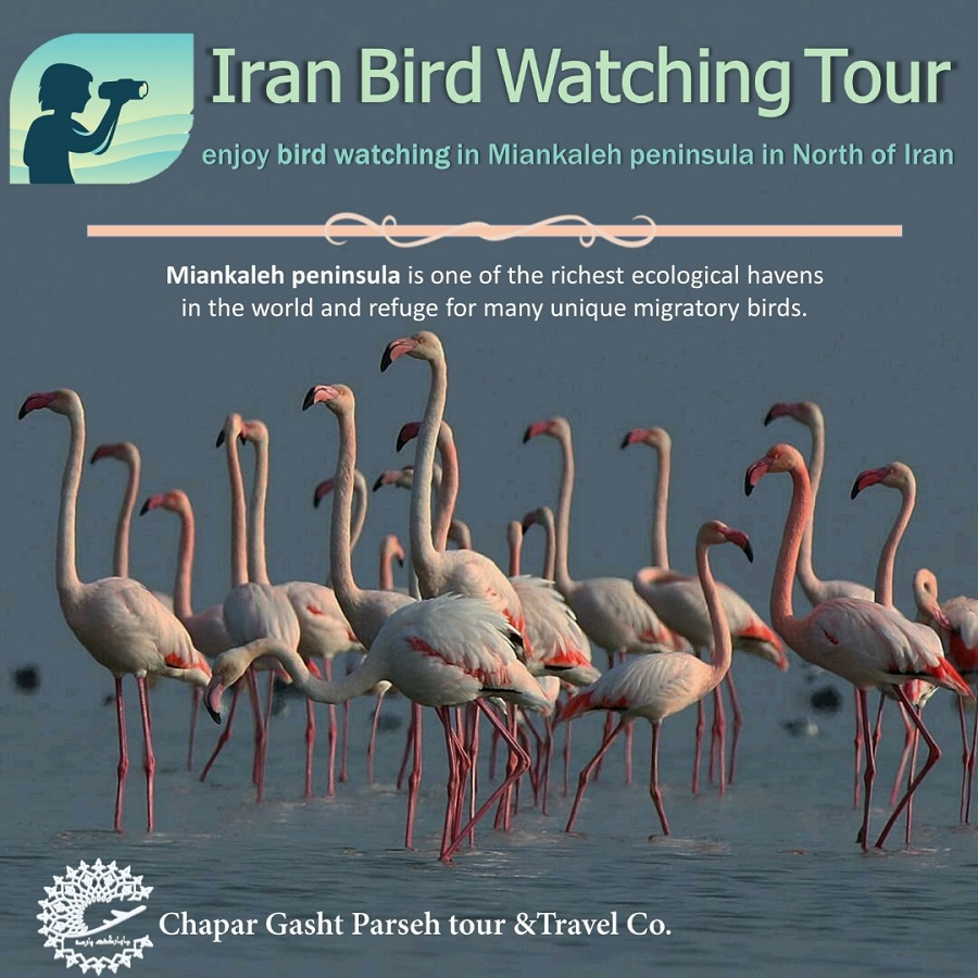 Bird-watching-Tour